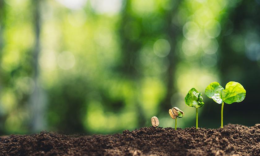 土から生える新芽