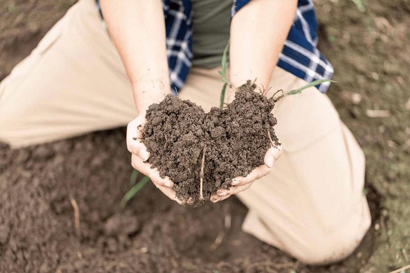 生命は土から生まれている。