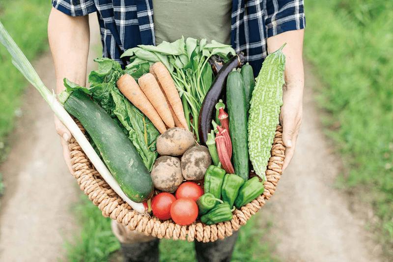365日、ほぼ毎日採れたて無農薬野菜を直送